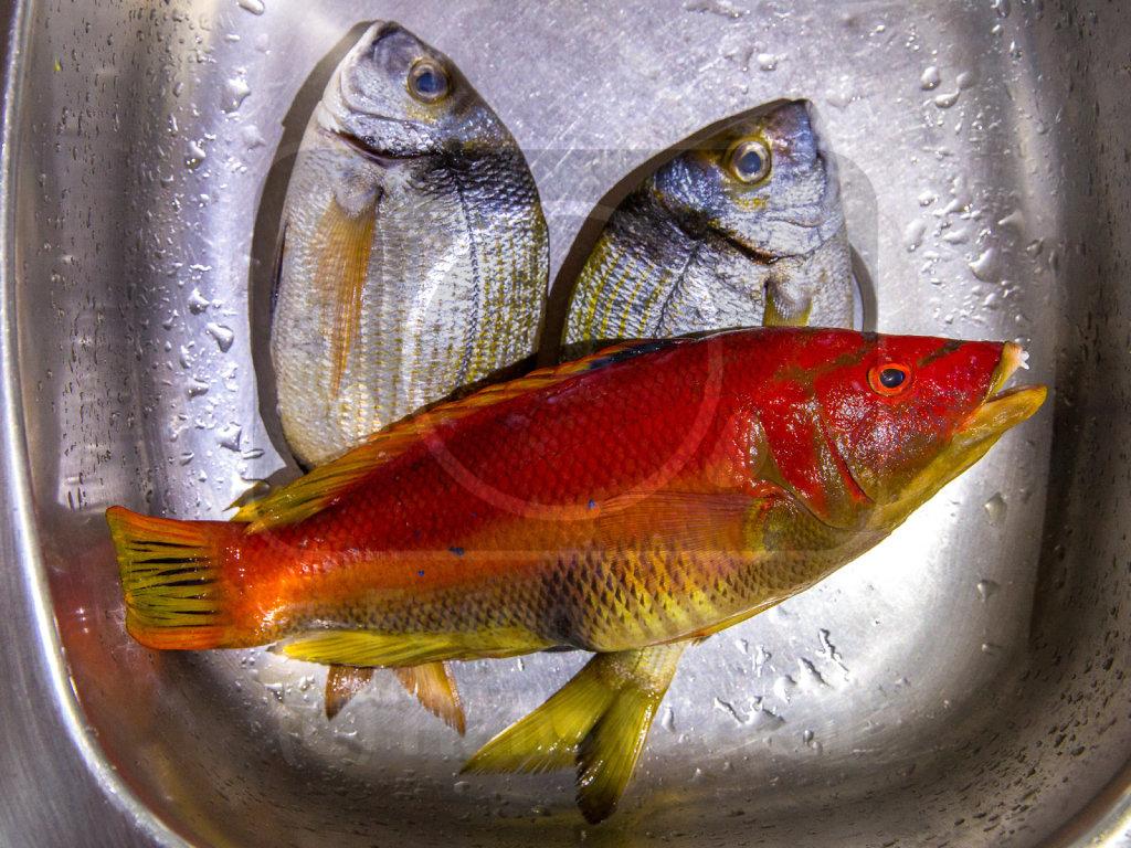 09 - Kontemplation vor dem Fischgericht